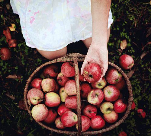 apple picking basket hand